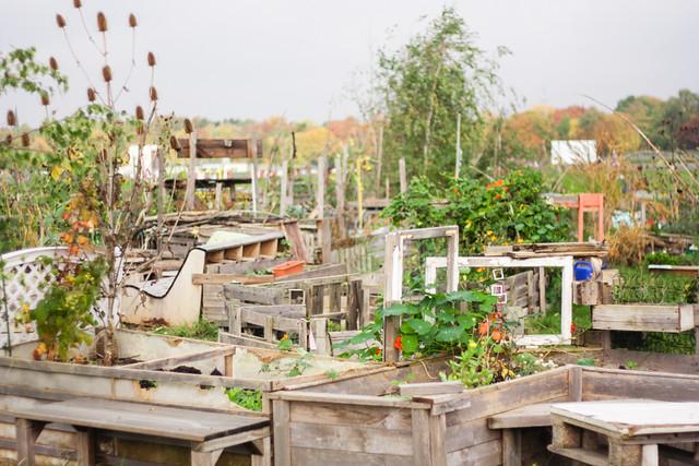Urban gardens, Tempelhof