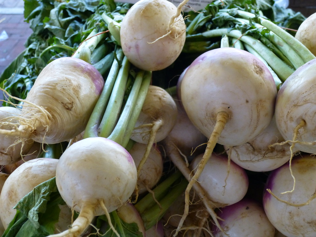turnips cooked, boiled, drained, without salt