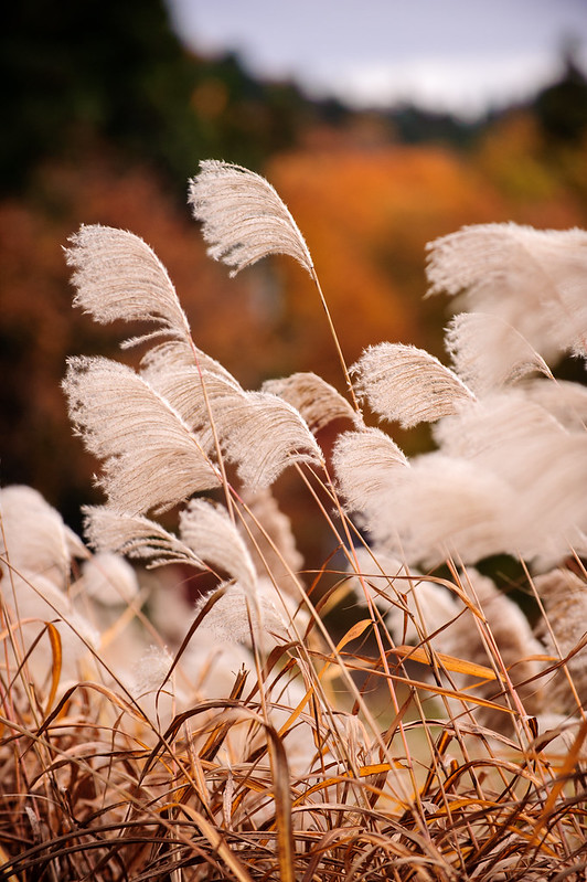 秋の奥只見ツーリング