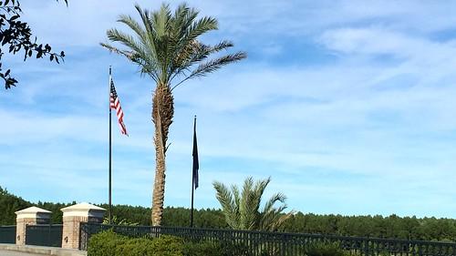 flag flags palmtrees palmtree adamhall palmetto usflag trackhead trackheadstudios trackheadxxx