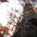 fall-7781 by jlkwison