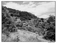 2014-06-03_Cassagnas_St-Etienne-0043
