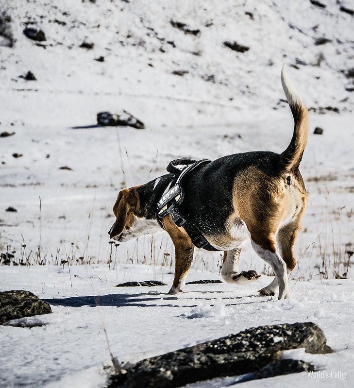 Mia al Lago del Moncenisio , cane