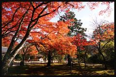 日本京都[高雄]-神護寺.65