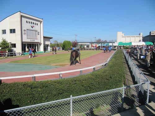 金沢競馬場のパドックの植え込み