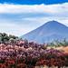2016 Autumn Fuji by shinichiro*