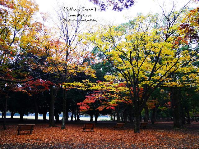 日本東京景點澀谷區代代木公園賞楓葉 (10)