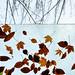 L'automne suspendu by James_D_Images