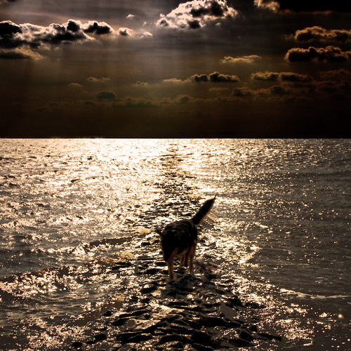 The Old Dog and the Sea