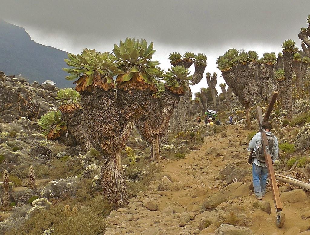 Tanzania (Kilimanjaro) Image25