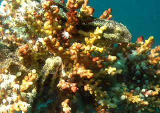 """<img src=""""padi-diving-km-sipidan-wreck-tioman-island-malaysia.jpg"""" alt=""""PADI diving KM Sipidan Wreck, Tioman Island, Malaysia"""" />"""