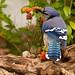 Geai bleu - Blue Jay by Nick288