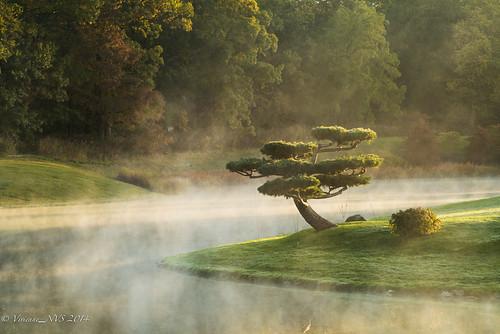 mist sunrise garden japanesegarden illinois preserves cookcounty chicagobotanicgarden skokielagoons cookcountyforestpreserves