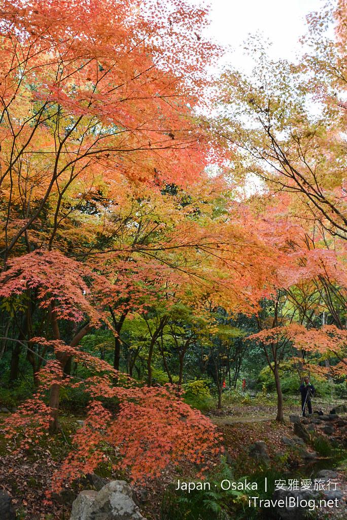 大阪赏枫 万博纪念公园 红叶庭园 10