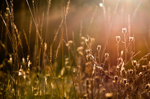 autumn light sun fall field grass dead back glow zoom walk thistle rays lit