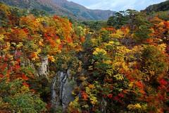 贅沢  Luxurious  ~宮城,鳴子峽 Naruko Gorge ~