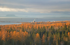 Tamarack Season in Thunder Bay