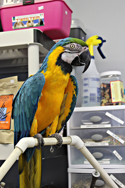 All Kinds Of Stickers: All Kinds Of Parrots :d