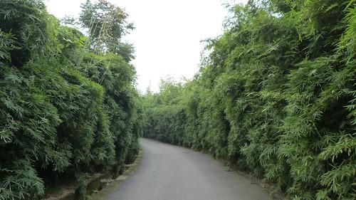 Chengdu-Teil-2-056