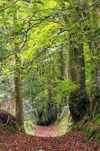 wood autumn woodland track path somerset pathway aonb quantockhills trackway qauntocks