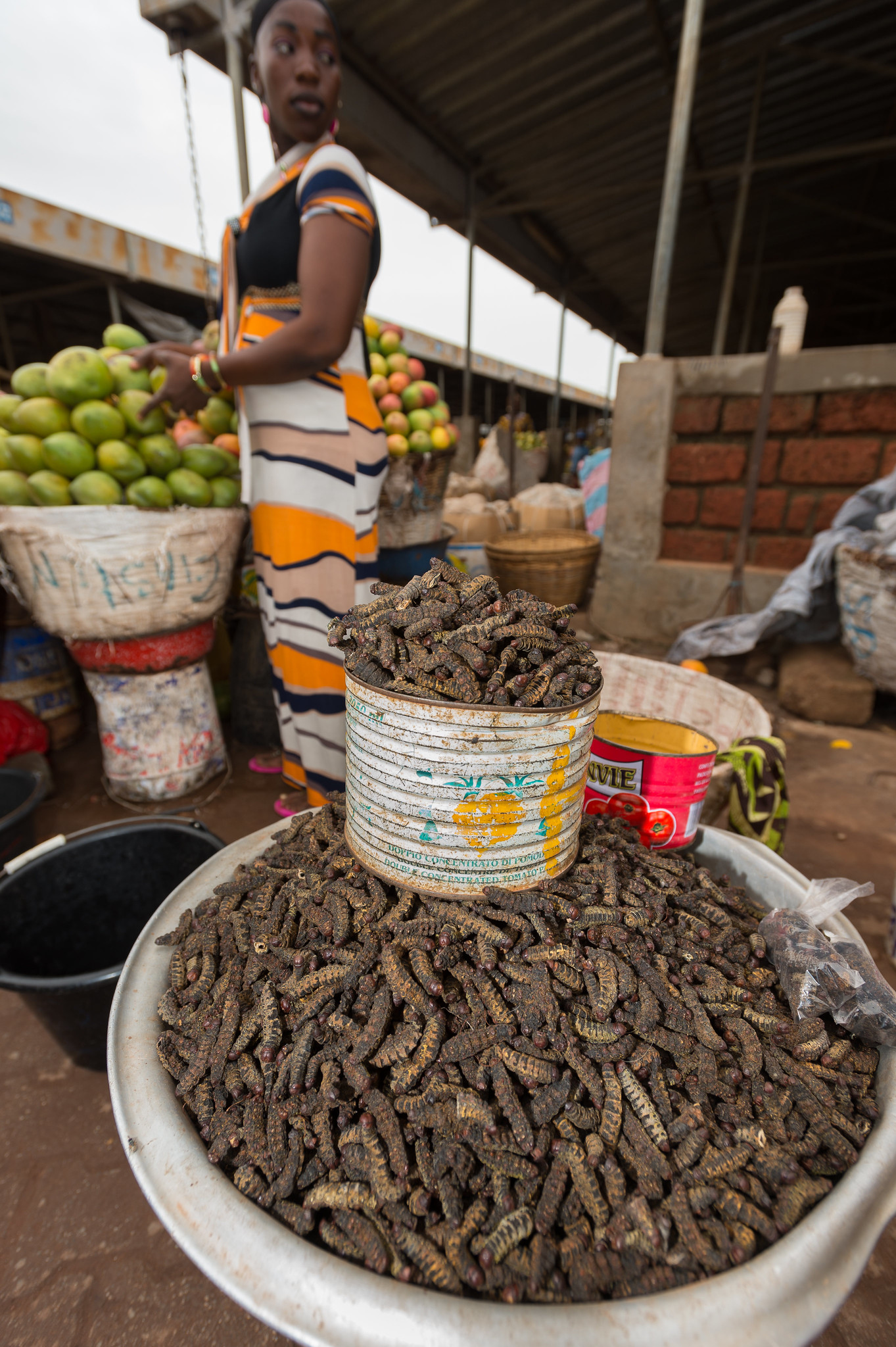 Dried Caterpillars for Sale