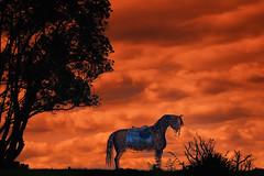 Warhorse Requiem