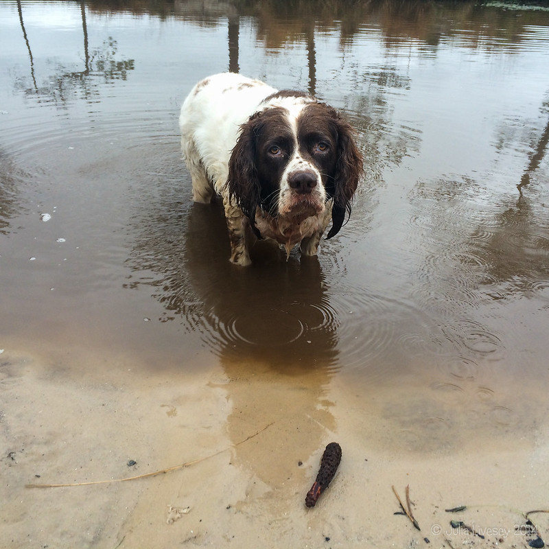 Max in the pond