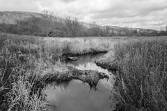 Broken beaver dam on Bee Brook
