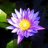 Lotus :heart:️#4seasons