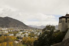 Lhasa - Lhasa - 1
