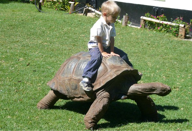 1_tortuga gigante-diarioecologia.jpg