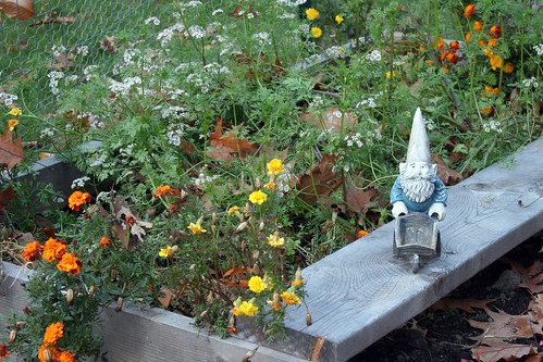 gnome with marigold and coriander IMG_0513