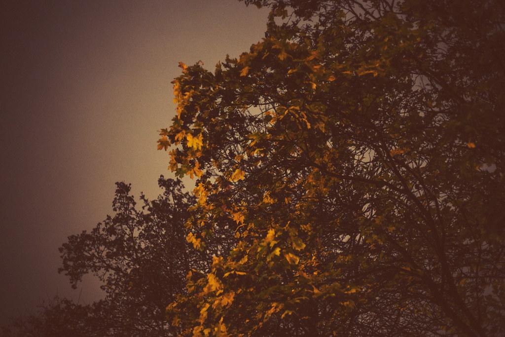 142/365 - november trees