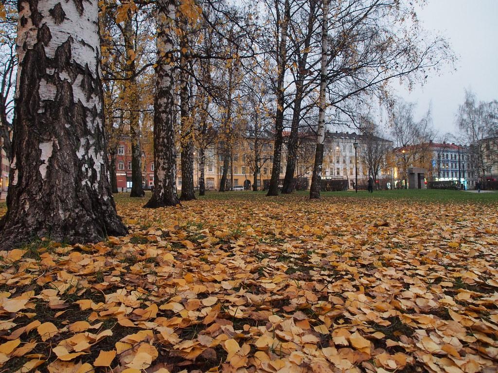 Birkelunden Park, Oslo in November