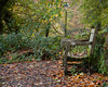 Just sit down and enjoy autumn