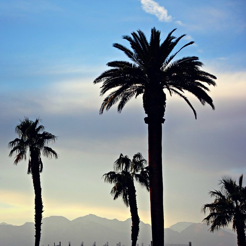 Palm Trees & Mountains in Las Vegas