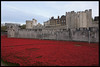 The Tower of London Poppys 2 by MTB1975