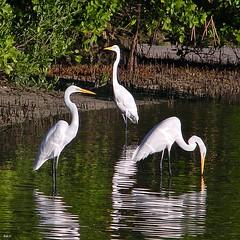 Three Friends Fishing