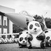 Air force & Panda ???