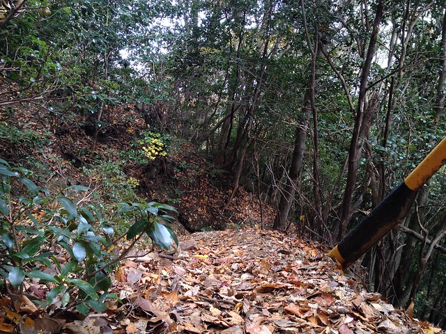 鎌ヶ岳 長石尾根 ふかふか枯葉絨毯