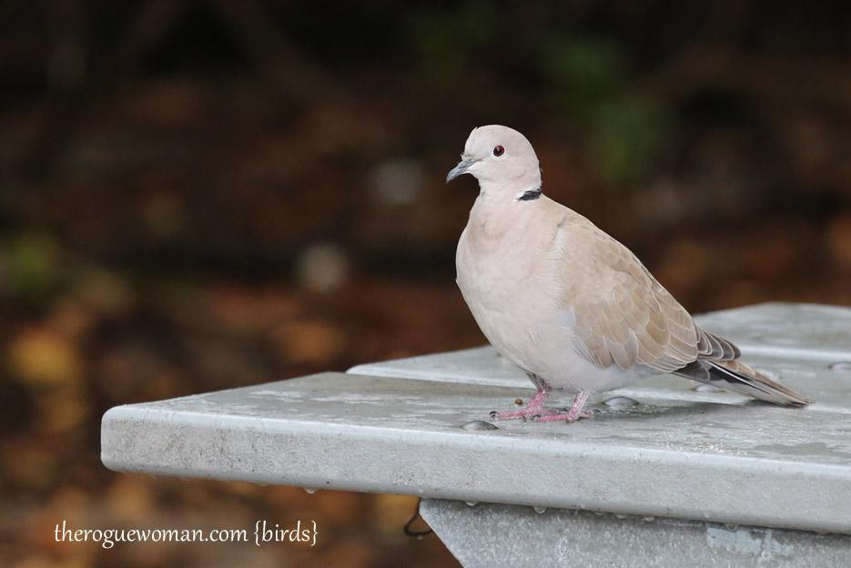 091514_bird18
