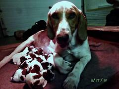 Maxine's Puppies