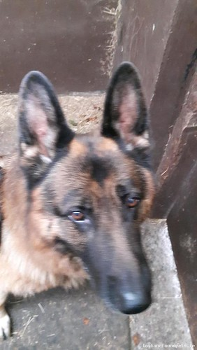[Reunited] Mon, Oct 31st, 2016 Found Male Dog - The Local Area, Mountmellick, Laois