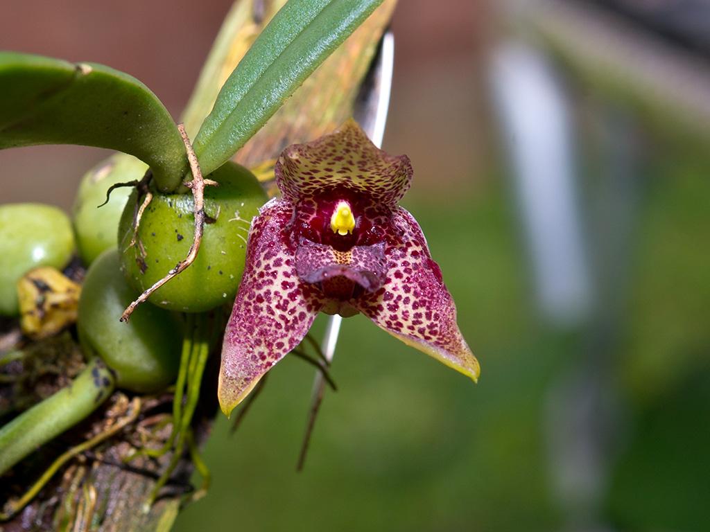 Flickr photos tagged disciflora
