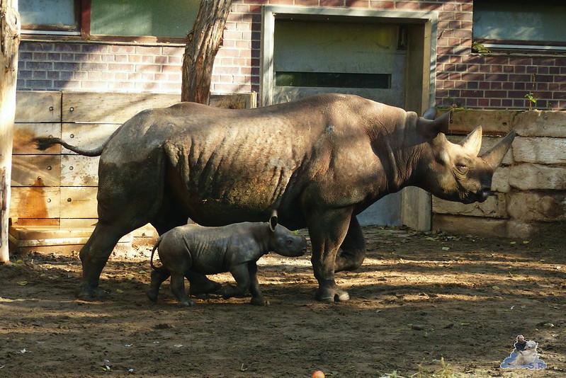 Berliner Zoo 45