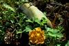 Calabaza y su flor