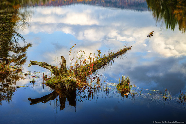 Fallen Tree with Reflections