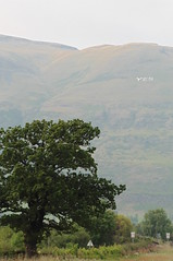 Yes sign on the Ochil Hills, September 2014