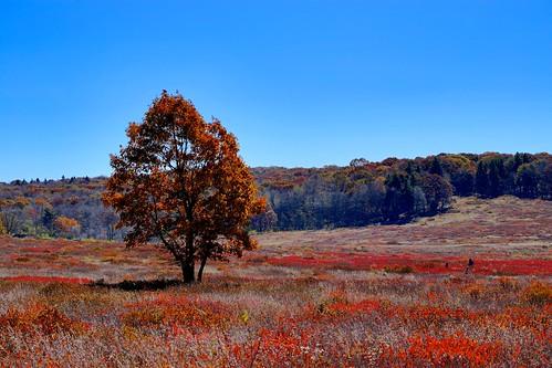 travel autumn sky fall landscape fallcolor outdoor shenandoah bigmeadows shenandoahnationalpark