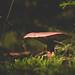 Mushroom season by k70vision